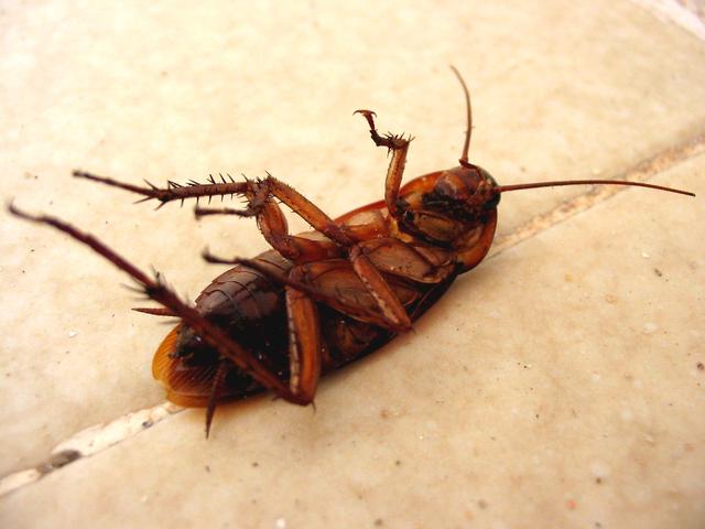 Pest Control and New Smyrna Beach